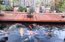 Top 10 công ty thiết kế hồ cá koi uy tín, giá tốt tại Tphcm