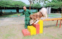 Cách huấn luyện chó đơn giản tại nhà