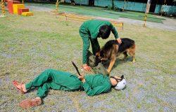 Trường huấn luyện chó cảnh, chó nghiệp vụ uy tín nhất