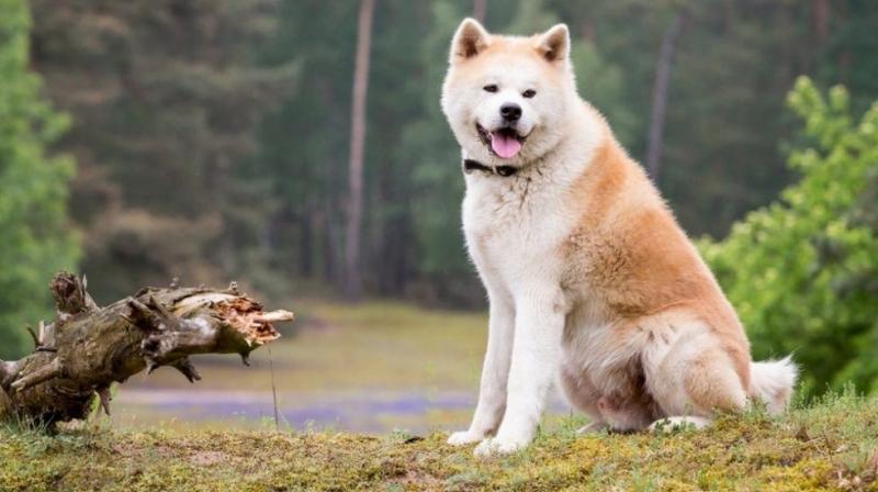 Bài văn tả con chó số 5