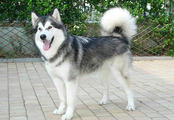 Bài văn tả con chó số 6